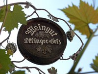 Ollinger Gelz Winery